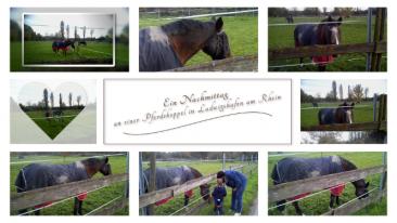Impressionen von einer Pferdekoppel