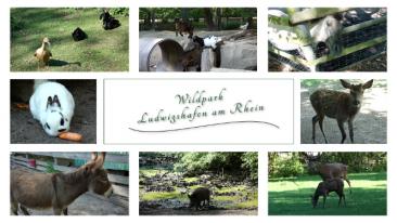 myBild83 - Impressionen vom Wildpark in Ludwigshafen am Rhein