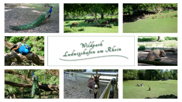 myBild84 - Impressionen vom Wildpark in Ludwigshafen am Rhein